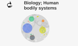 Biology; Human bodily systems