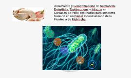 Aislamiento y Serotipificación de Salmonella Enteritidis, Ty
