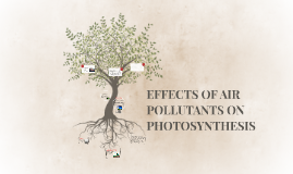 Air Pollution     Its Nature  Sources  And Effects   Environment