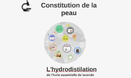 constitution de la peau