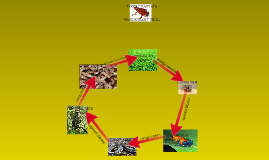 Food chain of a poison dart frog