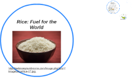 Rice: Fuel for the World