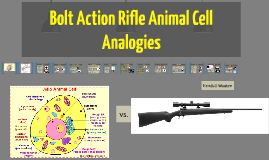 Copy of Bolt Action Rifle Cell Analogies