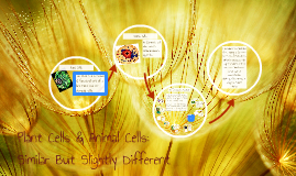 Copy of Plant Cells & Animal Cells: