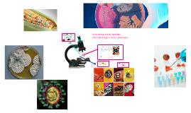 Copy of Interpretación de análisis microbiológicos de los alimentos.