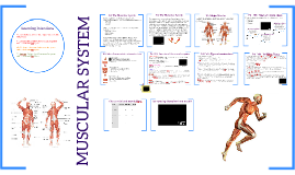 Assignment 2: Muscular System