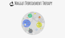 Maggot Debridement Therapy