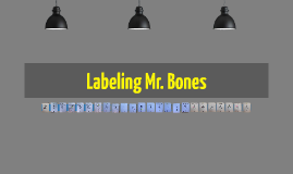 Labeling Mr. Bones