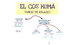 EL COS HUMÀ FUNCIÓ DE RELACIÓ) P1