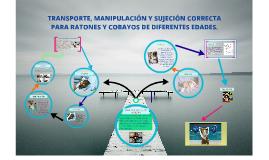 Copy of TRANSPORTE, MANIPULACIÓN Y SUJECIÓN CORRECTA PARA RATONES Y