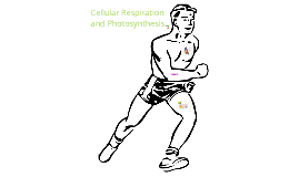 Photosynthesis & Cellular Respiration Visual