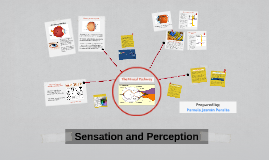 Copy of Sensation and Perception