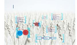 OSCE Tipos de proceso