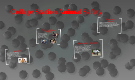 College Station Animal Safety