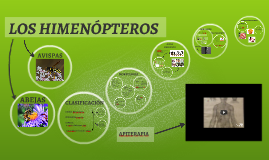 Copy of LOS HIMENÓPTEROS