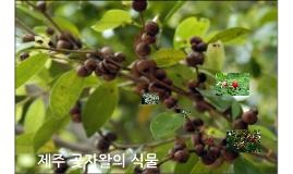 제주 곶자왈의 식물