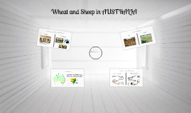 Australian Wheat and Sheep