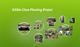 Copy of Edible Class Planting Project