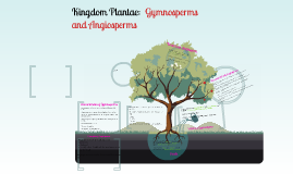 Kingdom Plantae: Gymnosperms and Angiosperms