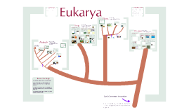 Biodiversity 3: The Eukarya