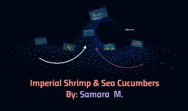 Imperial shrimp & sea cucumbers by Samara McLendon on Prezi