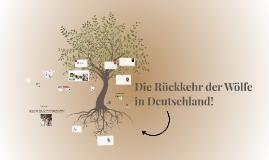Copy of Der Wolf zurück in Deutschen Wäldern!