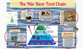 Copy of The Nile River Food Chain