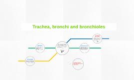 Trachea, bronchi and brioncholes