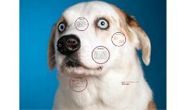 Copy of Analisis de Historia del hombre que se convirtio en perro