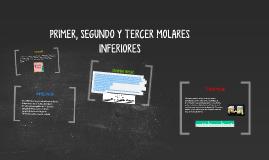 PRIMER, SEGUNDO Y TERCER MOLARES