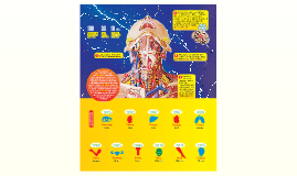 Ученые готовы  к первой пересадке головы человека