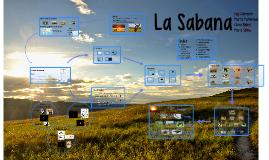 Copy of Sabana