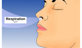 Copy of Respiration