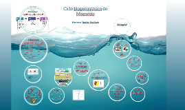 Copy of Copy of Ciclo biogeoquímico do Magnésio