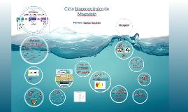 Copy of Copy of Ciclo biogeoquímico do Magnésio