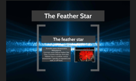 The Feather Star
