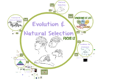 Focus 12: Evolution & Natural Selection