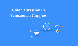 Copy of Color  Variation in Venezuelan Guppies