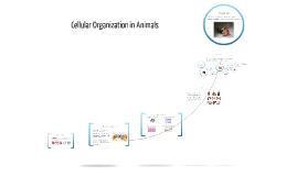 Copy of Cellular Organization