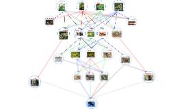 tasmanian rainforest food web by brighton cretney on Prezi