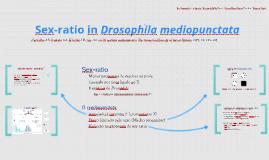 Sex-ratio in Drosophila mediopunctata