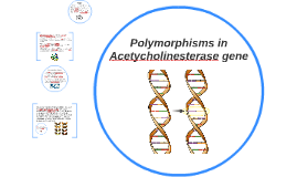 Polymorphisms in Acetycholinesterase gene