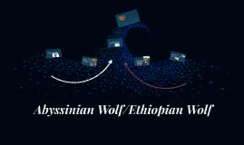 Abyssinian Wolf/Ethiopian Wolf