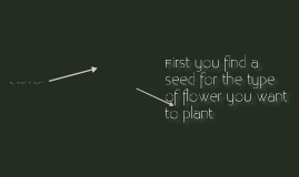 How to plant a flower?