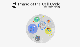 Phase of the Cell Cycle