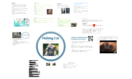 Fishing Cat Conservation