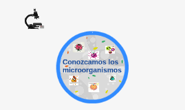 Conozcamos los microorganismos