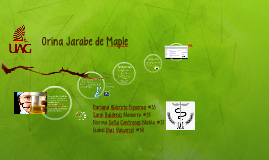 Orina Jarabe de Maple