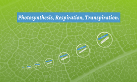 Photosynthesis, Respiration, Transpiration.