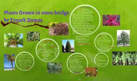 Copy of Copy of Plants Grown in stone bridge
